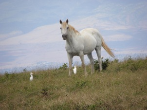 Horse - Dream Come True on Lanai